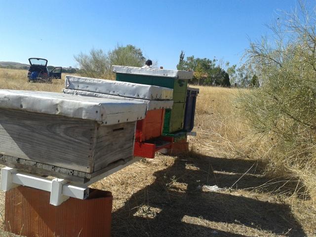Happy Hives