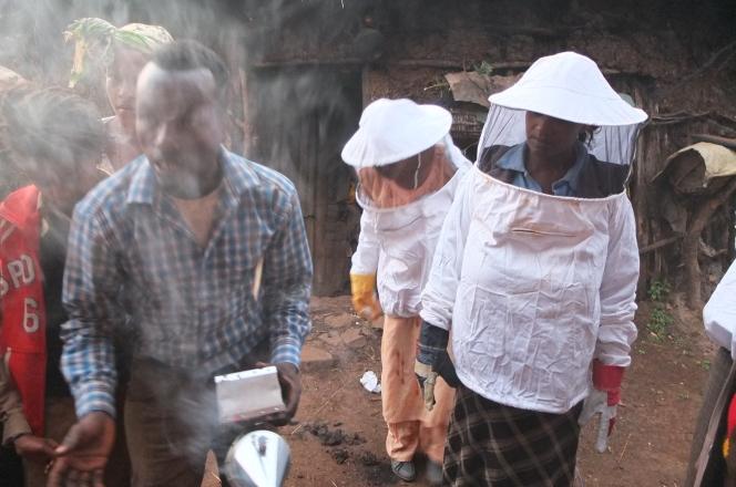 Hive Transfers in Kembata-TembaroEthiopia