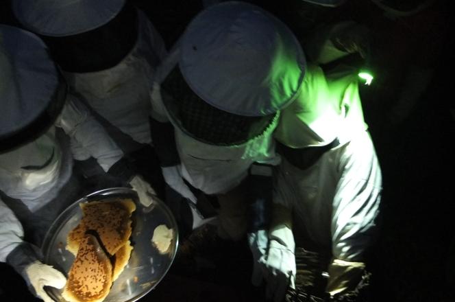Beekeeping Astronauts